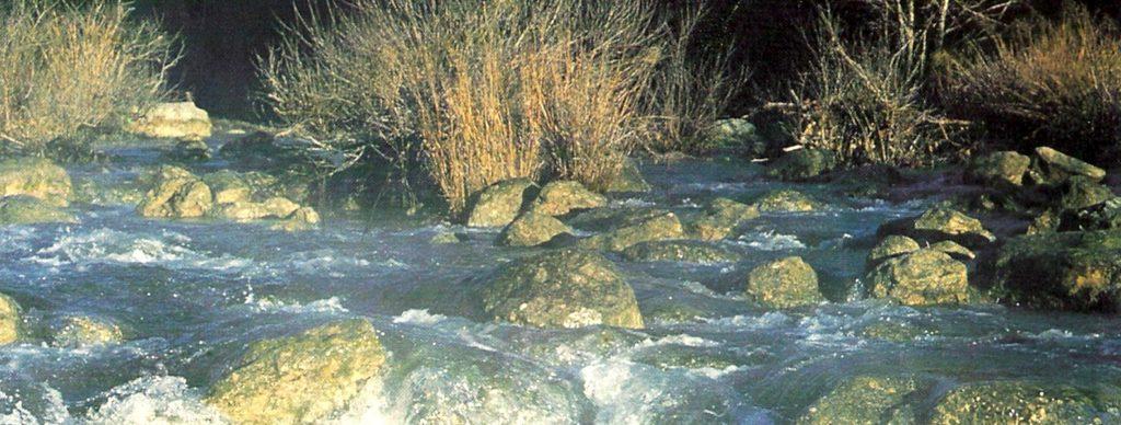 Barton Creek Stones