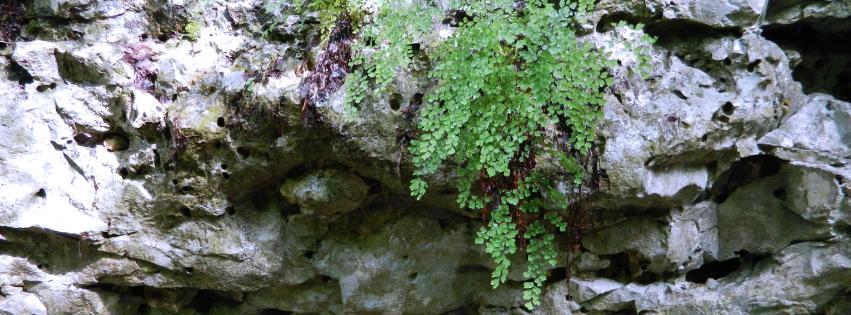 stone and foliage