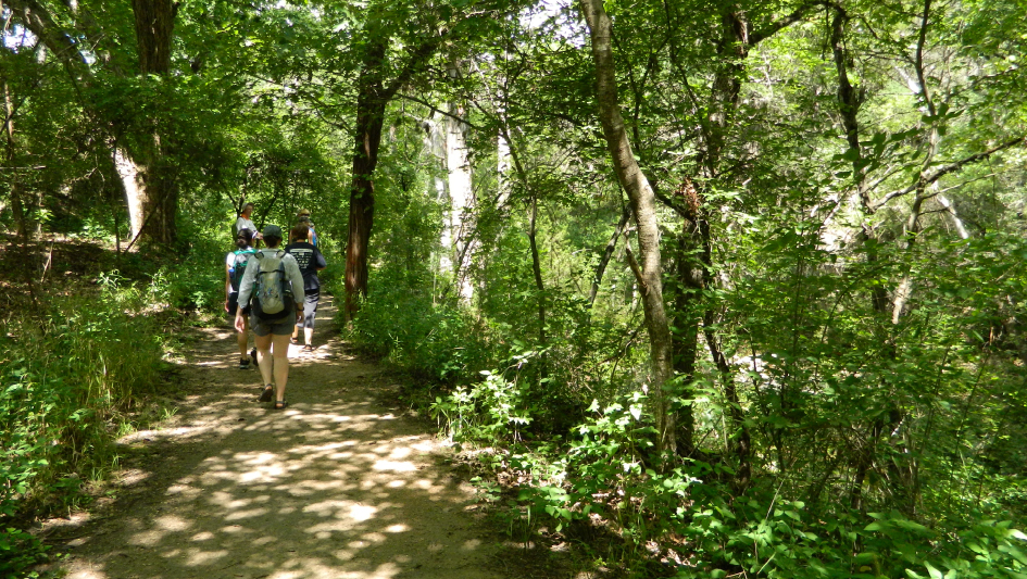 G2G Path through woods