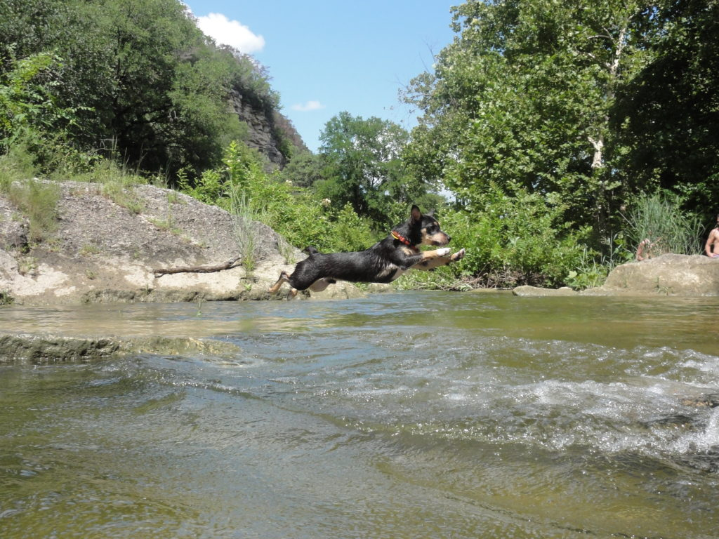 leaping doggo