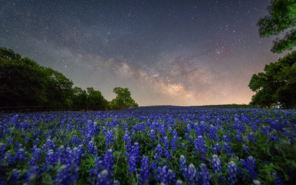Milky way over bluebonnet in Ennis, Texas