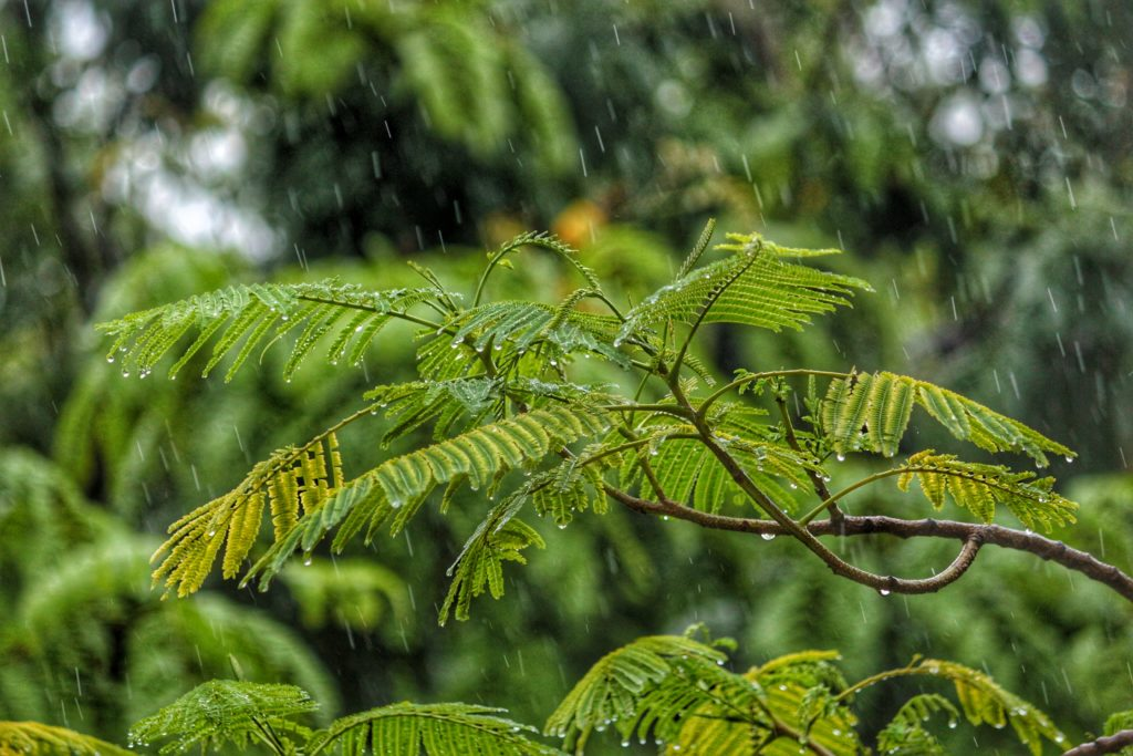 Rain hitting a fern