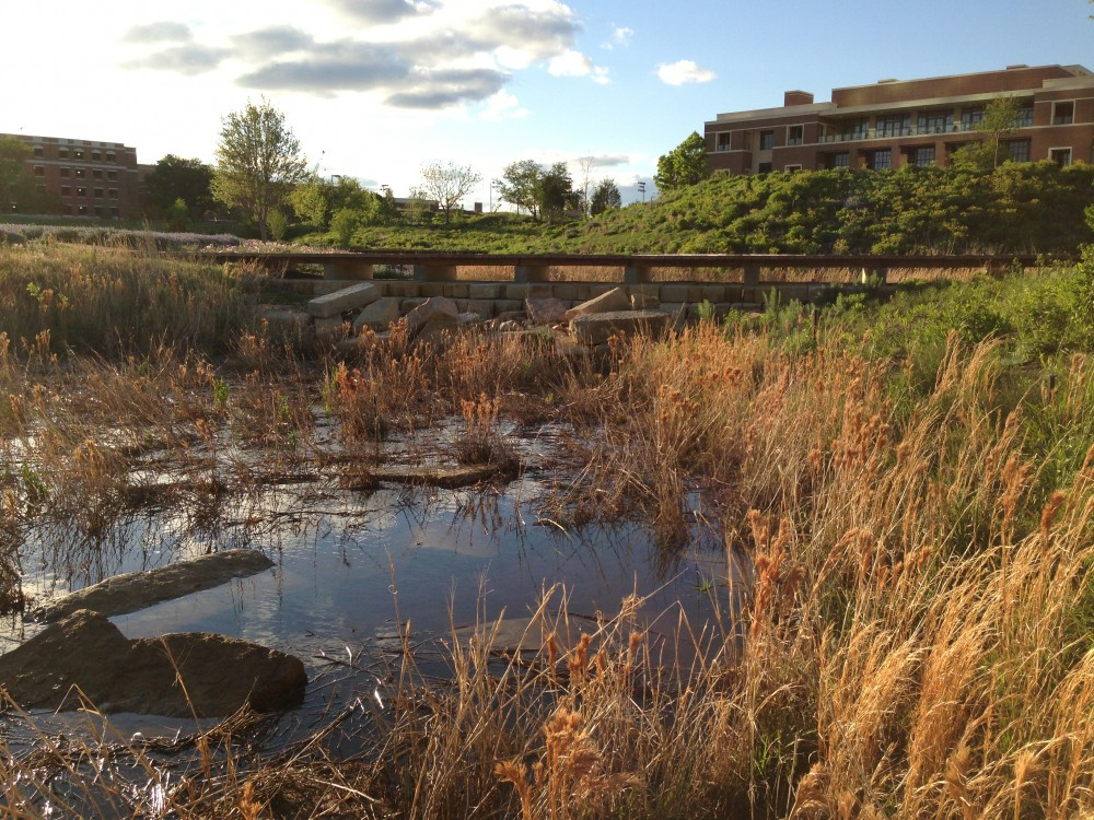 George W. Bush Library: praire bioswale after rain